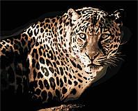 Картина за номерами в коробці Леопард AS0418 40*50см. Artstory животные. коты