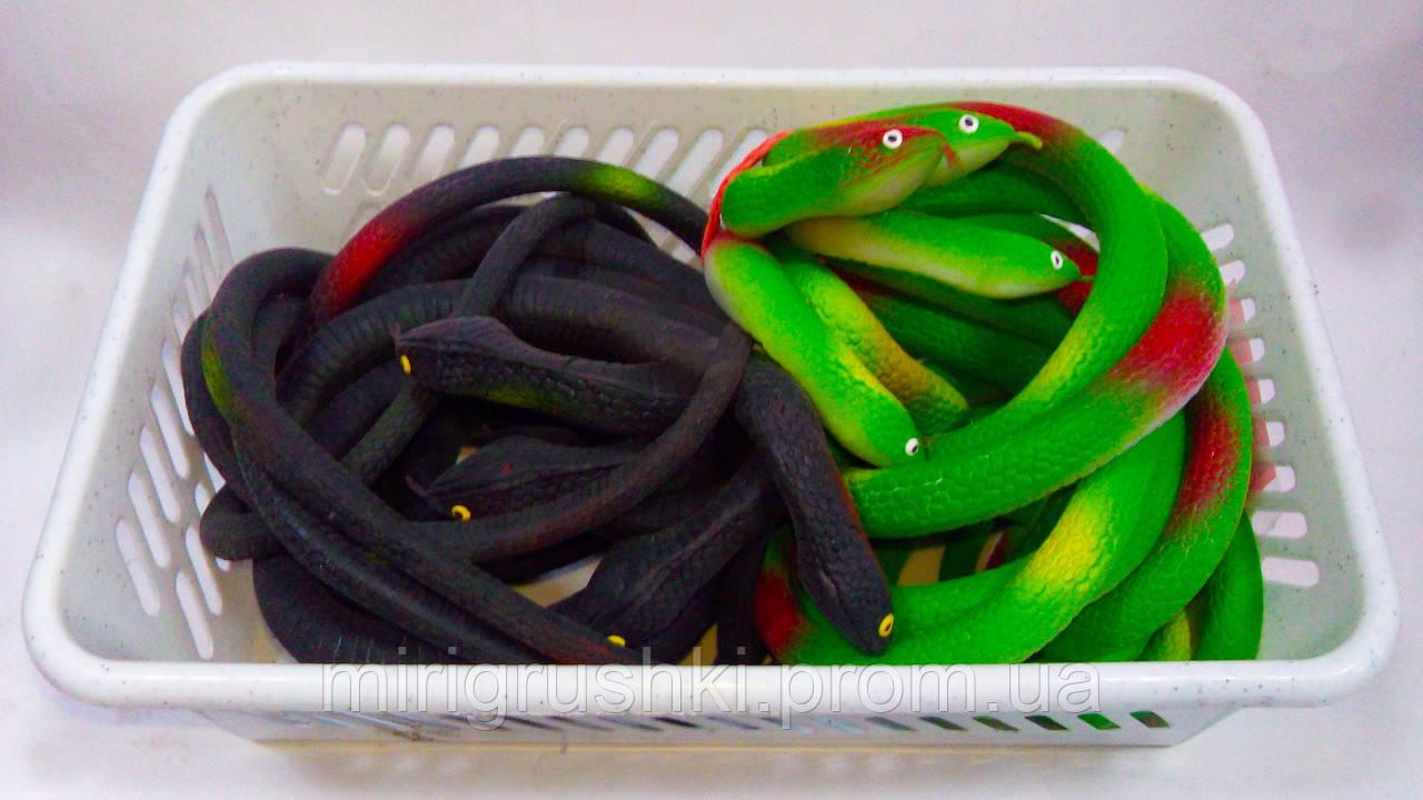 Змея Цветная