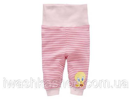 Трикотажные полосатые штаны с Твитти на девочек 0 - 2 месяца, р. 50 / 56, Looney Tunes / Lidl, Германия.