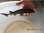 Рыба для разведения