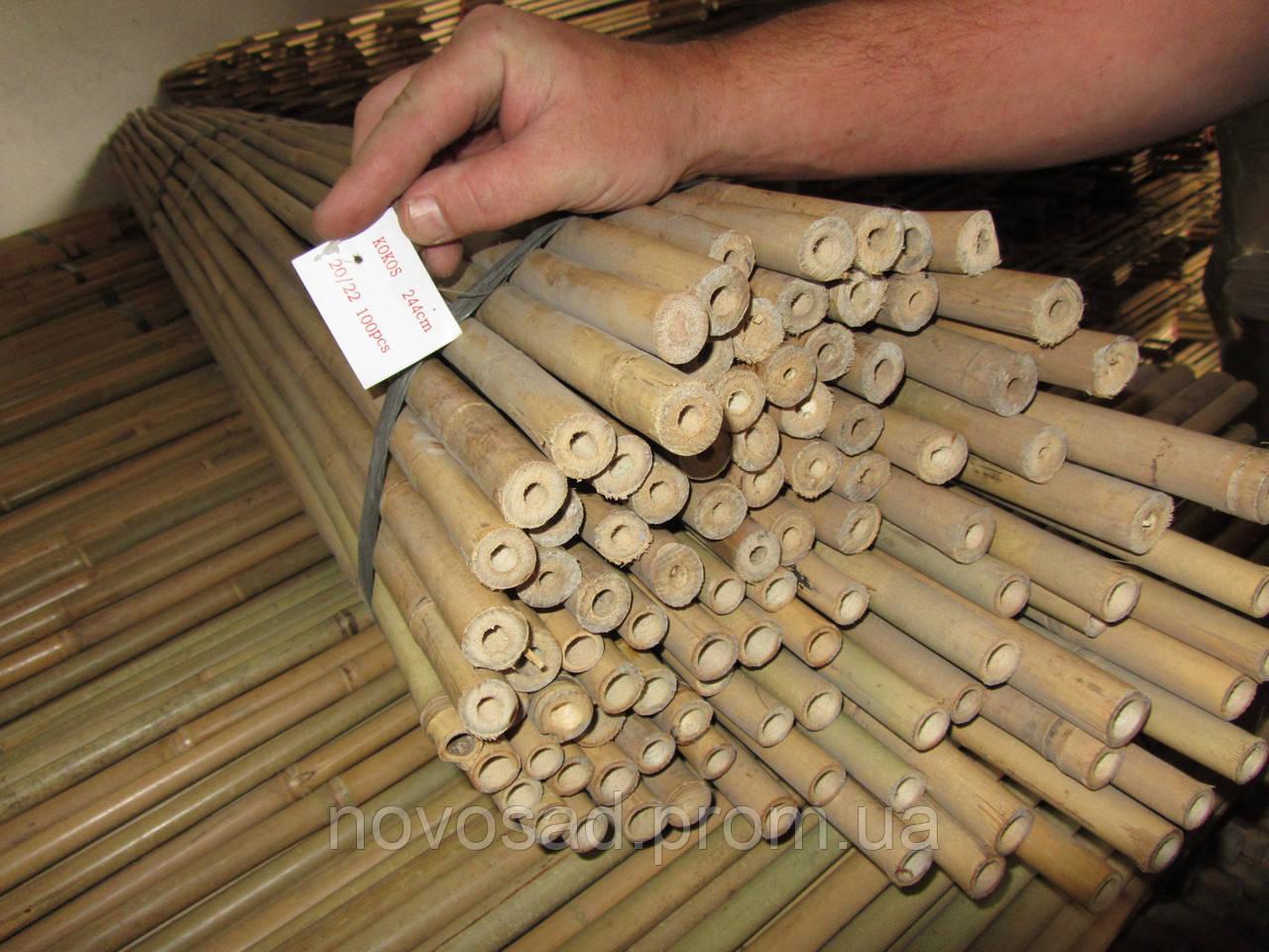 Бамбуковые стволы 120 см 14 16 мм  продажа, цена в Волынской области ... 07833f2f829