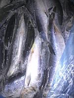 Сельдь 350+(Норвегия) (20 кг.)