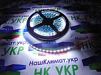 Светодиодная лента SMD AVT 600CW2835-12V, 5 мм., 9.6W/m, длинна 5м., 9000-1200К Холодный белый, IP20, premium