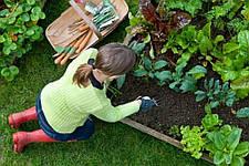 Що садити в червні?