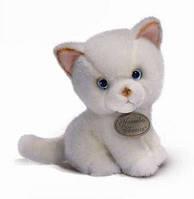 Персидский котенок  Persian Cat