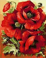 Картина по номерам Mariposa Великолепные маки (MR-Q1633) 40 х 50 см