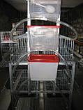 Клітки для 120 курей несучок, фото 2