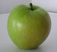 Яблоня «Крымка»(Зимнее лимонное). (вс). Раннезимний сорт.  , фото 1