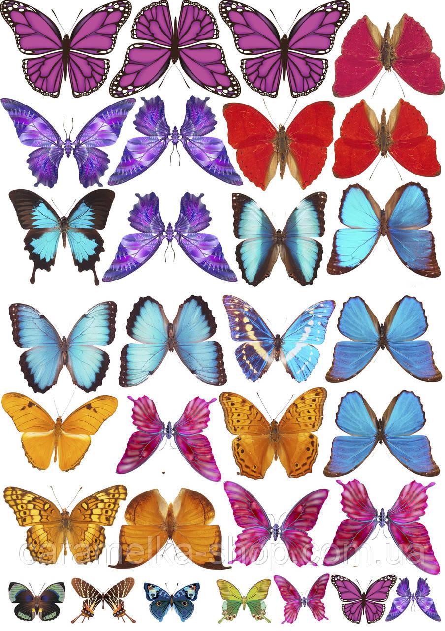Вафельна картинка метелики, для торта
