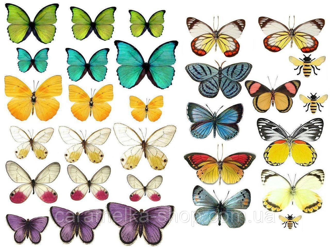 Сахарная картинка бабочки, для торта
