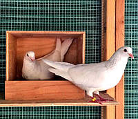 """Гнездовье для голубей """"Взлёт"""""""