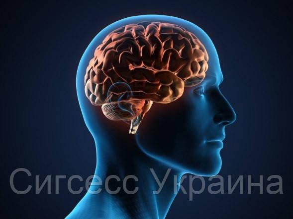 Забота о мозге и профилактика болезней