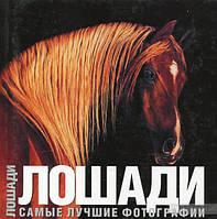 Лошади. Самые лучшие фотографии