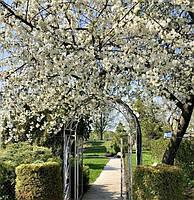 Сезон висадження рослин триває від початку весни, до середини зими, літо НЕ виключення!