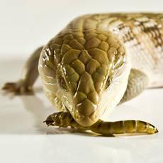 Корма для рептилий и насекомых