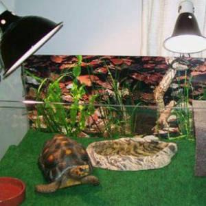 товары для домашних рыб, рептилий и насекомых, общее