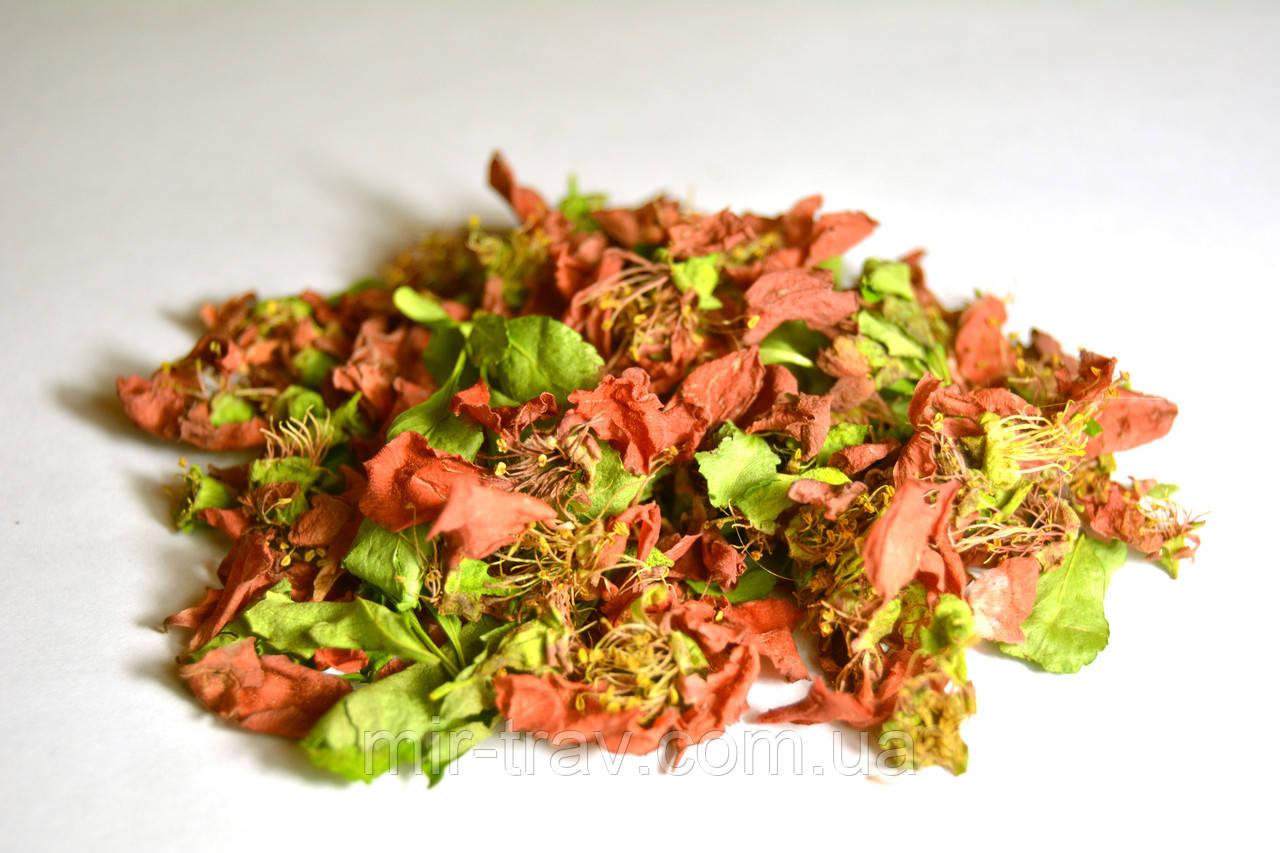 Айва японская цветки 50 грамм
