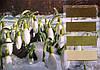 Велюр цветной зеленые тона Италия