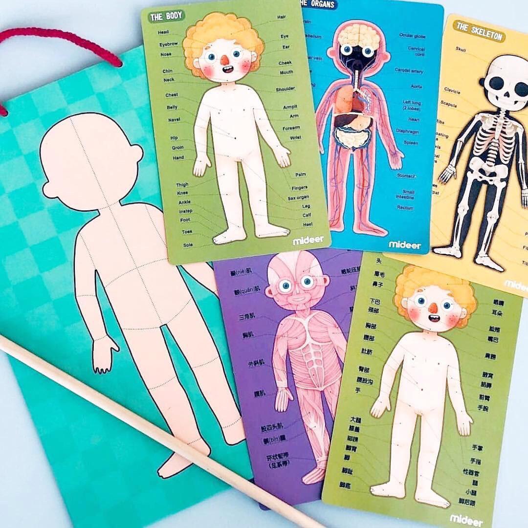 Игровой набор пазл для детей Анатомия, Mideer