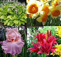 Садовые цветы многолетники(лилии,георгины,ирисы,хоста,пионы)