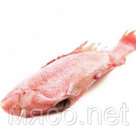 Окунь 200/300 с/м - www.Мясо.net - Мясо, птица, рыба, морепродукты, икра. в Киеве
