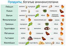 Амінокислоти