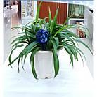 Шары для полива растений Аква Глоб | лейка колба Aqua Globe | автополив цветов, фото 6