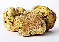 Мицелий белого трюфеля гриб Tuber magnatum семена (пьемонтский или итальянский) первичный зерновой 0,5 литра