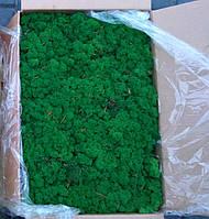 Мох стабилизированный 78 grass green. Мох для декорації, стабілізований.