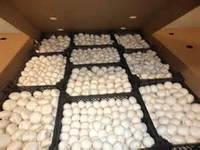 Белый шампиньон, готовый засеянный комлект 3в1! 60x40. Мицелий + покровный грунт+компост!