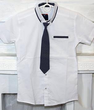 Рубашка для мальчика белая галстук