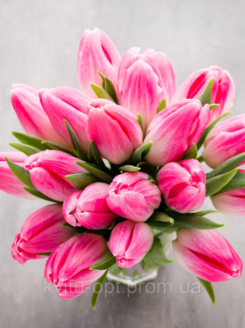 Завершается прием заказов на охлажденные луковицы тюльпанов и ирисов