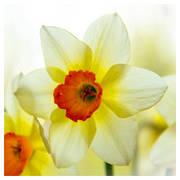 Поздравление с весенним праздником и пожелания прекрасной половине человечества