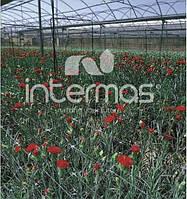 Сетка шпалерная для цветов 10*10 см 500 м Intermas SZ-120/12 Испания