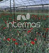 Сетка шпалерная для цветов 12,5*12,5 500 м Intermas SZ-100/8 Испания