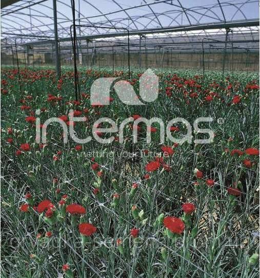 Сетка шпалерная для цветов 15*15 см 500 м Intermas SZ-120/8 Испания