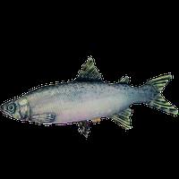 Подушка-іграшка Антистрес Риба «Семга» (гігант)