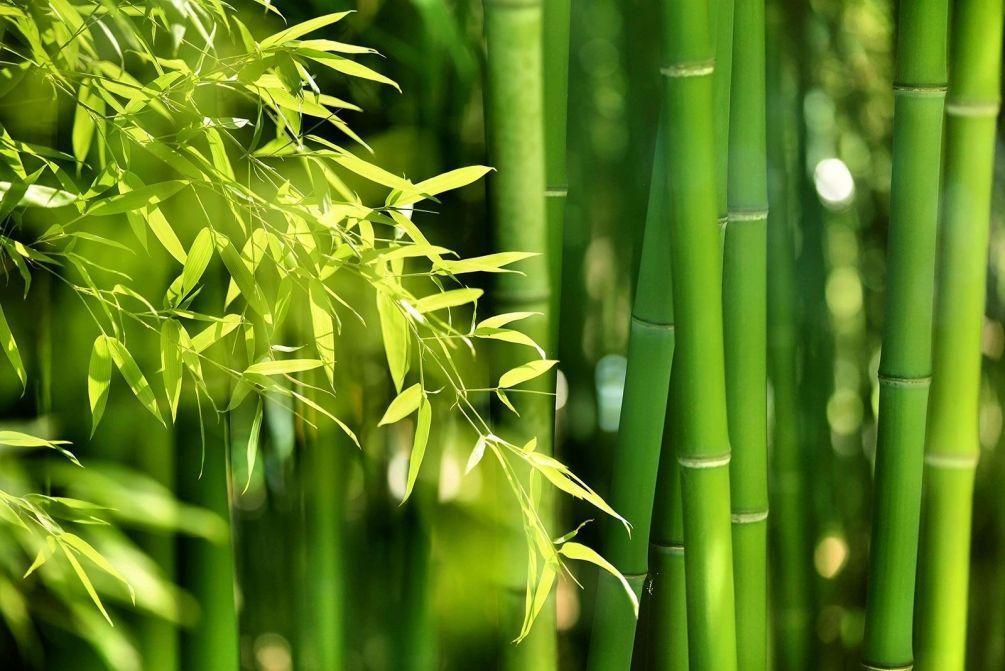Носки из бамбука
