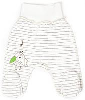 Ползунки для новорожденных Верес Funy sparrows strip интерлок 50 молочный