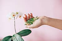 РОСТКИ РАСТОРОПША микрогрин  микрозелень зелень  Sadovе Premium 100% Bio Organic 80 г, фото 1
