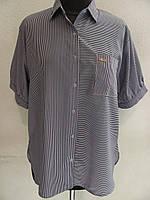 Классическая летняя блуза-рубашка из ткани софт, под юбку или брюки, (р-р.52,56) Код 1830М