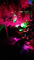 Добавьте вашим деревьям цветных красок