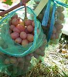 Сетка защитная для винограда на 5 кг, 29х40 см (упаковка 50 шт), фото 2