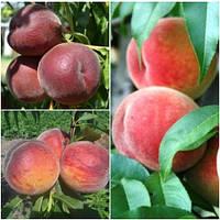 Персик дерево сад (Ерлі Хрест, Пінк Леді, Річ Мей)