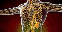 Как разогнать и очистить лимфу? Самые действенные способы!