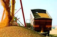 Перевезення зерна (пшениця, жито, рис, овес, ячмінь, кукурудза, сорго, просо)