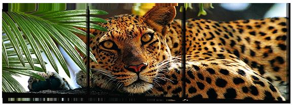 Модульная картина Interno Искусственный холст Леопард 142х46см (Z783M)