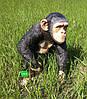 Садовая фигура Шимпанзе большой, фото 4