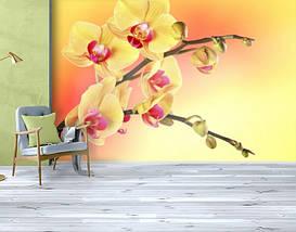 Фотообои текстурированные, виниловые Цветы, 250х380 см, fo01inV_fl12070, фото 3