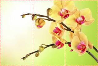 Фотообои текстурированные, виниловые Цветы, 250х380 см, fo01inV_fl12068, фото 2